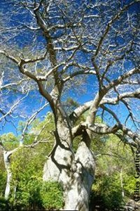 collection-photos-baobab4