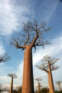 collection-photos-baobab1