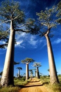 collection-photos-baobab3