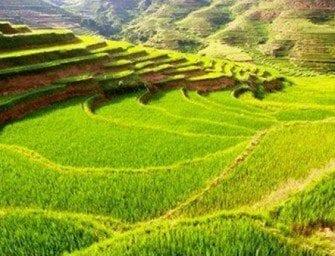 La culture du riz à Madagascar, agriculture des rizières malgache, vary malagasy