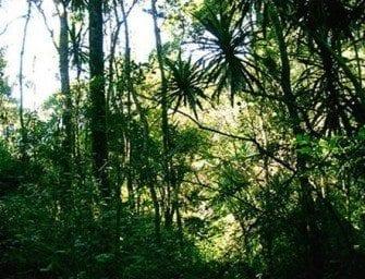 Les forêts primaires et secondaires – Extraordinaire densité et biodiversité