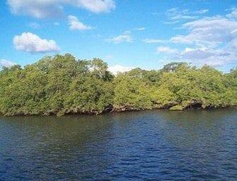 La Mangrove sur l'eau