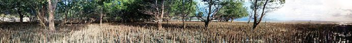 la-mangrove1
