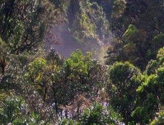 Les sakova, forêts de remplacement
