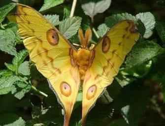 Les papillons – Plus de trois mille espèces