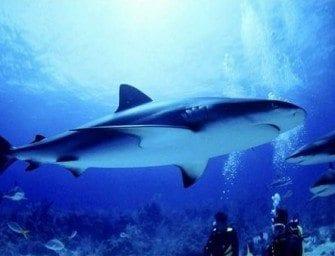 Les Requins et la Reproduction