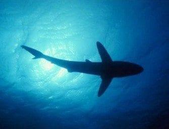 Les requins – Mystère et terreur