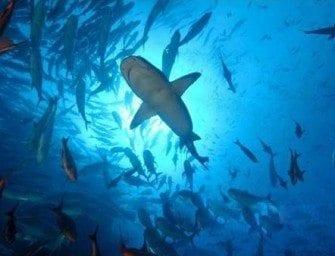 La Protection des Requins