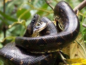 Les reptiles – Serpents et lézards